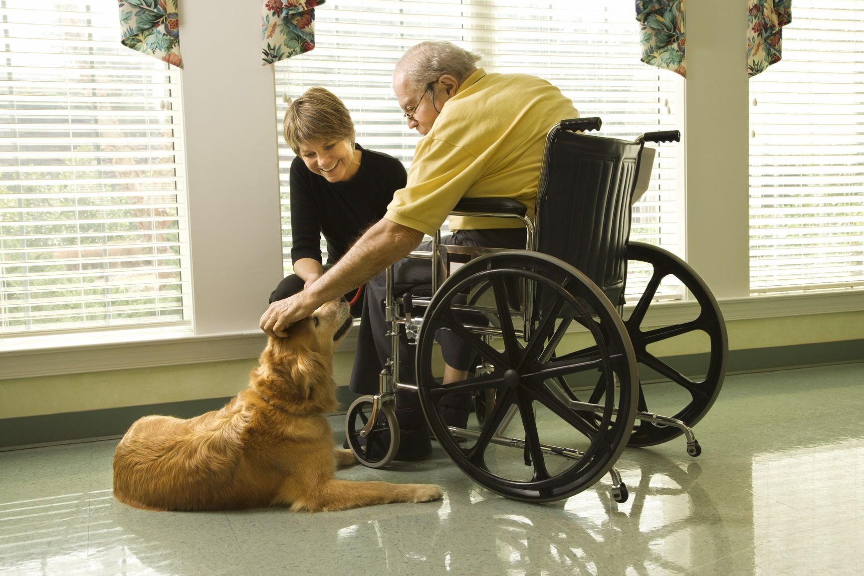 лечение общением с животными